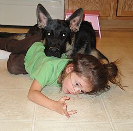 German Shepherd Dog Pictures 637