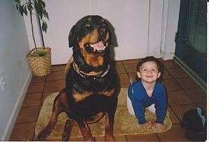 Rottweiler Pictures 703